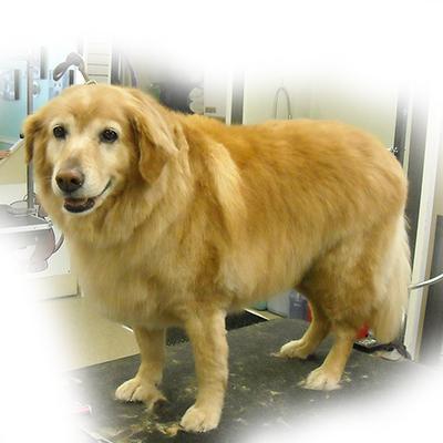 Carol S Dog Grooming